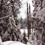 Snow Scene copy