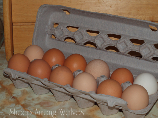 Egg Carton Second Try