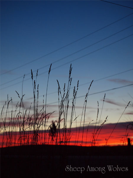 Sunset-with-grass