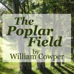 The Poplar Field