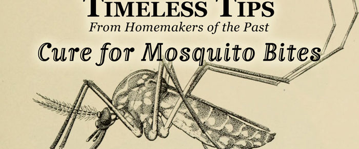 Homemade Cure for Mosquito Bites – Timeless Tip #5